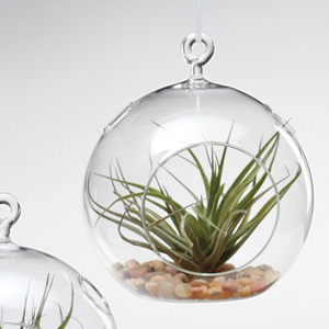 Round Hanging Glass Terrarium, Large