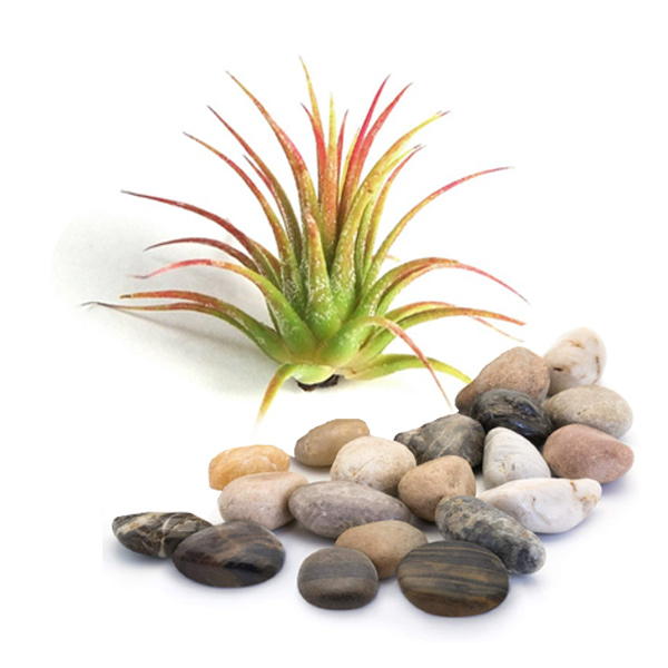 Air Plant Terrarium Kit, Small <a name=kits>