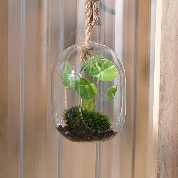Sole Hanging Glass Terrarium, Wide