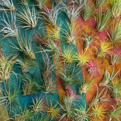 Air Plant Collection, Large